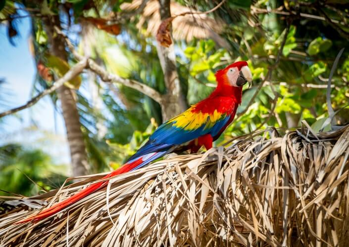 Exotic Holidays - And the Diseases in Tropical Destinations